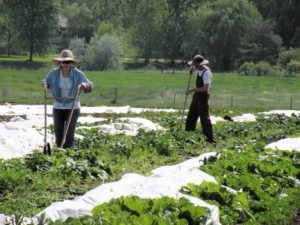 Farmers help during COVID-19 pandemic